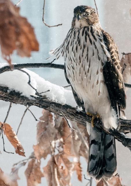 Roger F. Pasquier on Birds in Winter