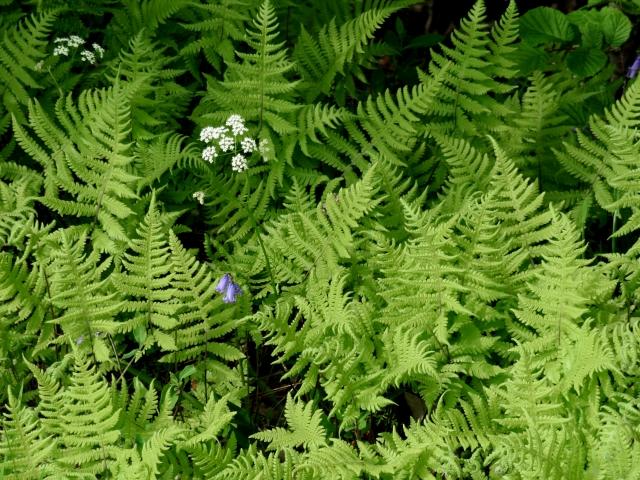 A highland roadside: Verge and woodland