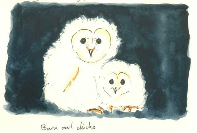 Wenfei Tong on Bird Love