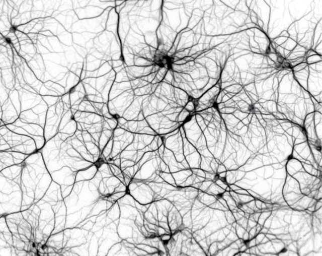 The dark neuron problem, or mind reading at 90% accuracy