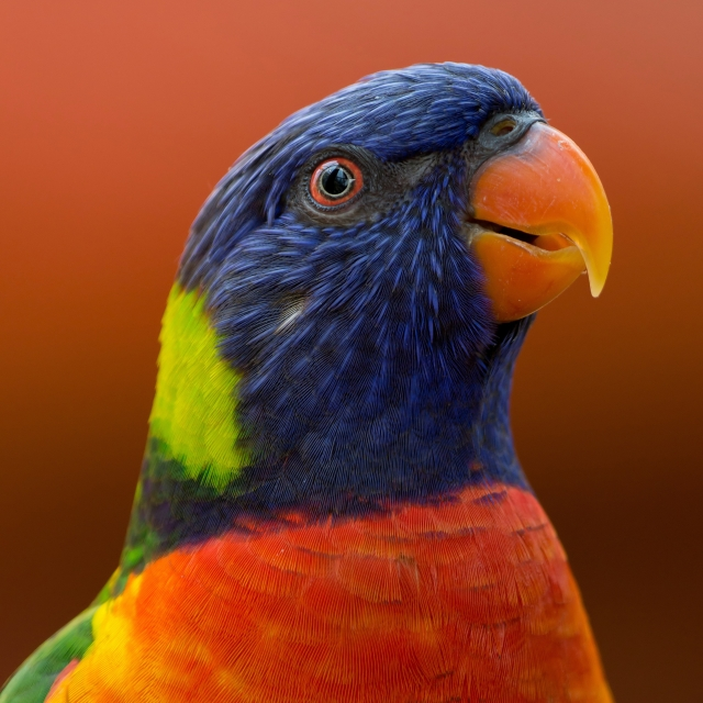 Close up photo of tropical bird