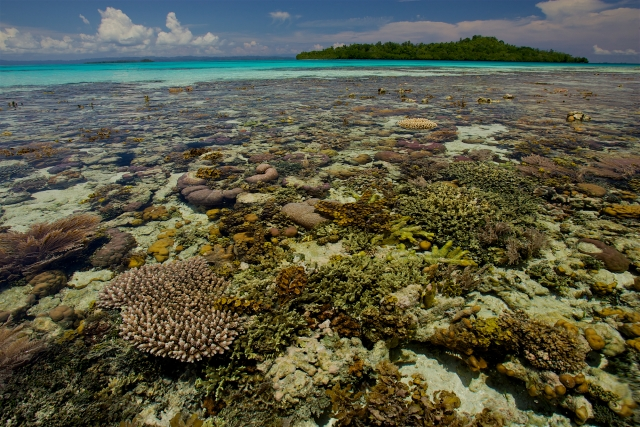 New Guinea, a very low tide reveals a coral reef