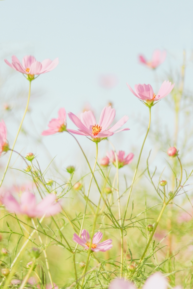 Photo of pink flowers in a field