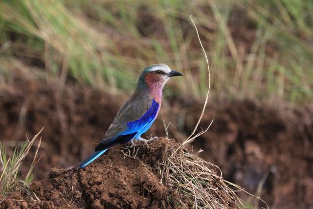 Photo of bird on tree branch